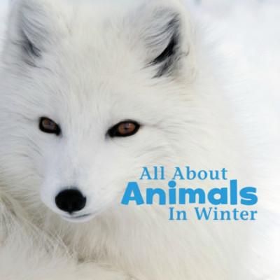 Celebrate Winter Series